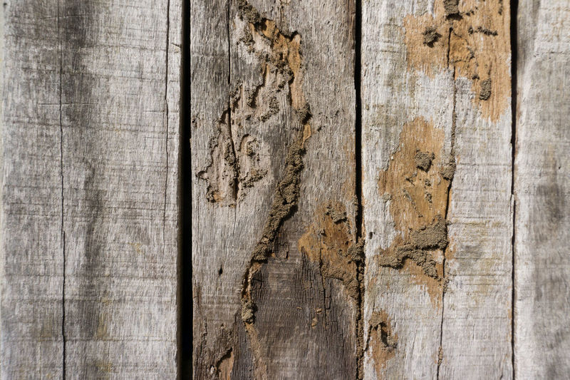 Old wood floor with wood termites. Termites Eat Wood. Antique Backgrounds Brown Close-up Copy Space Damaged Dirty Flooring Full Frame Material No People Old Pattern Plank Rough Scratched Surface Level Termites Termites Charleston Sc Termites Wood Termites' Home Textured  Textured Effect Timber Wall - Building Feature Weathered Wood Wood - Material Wood Grain