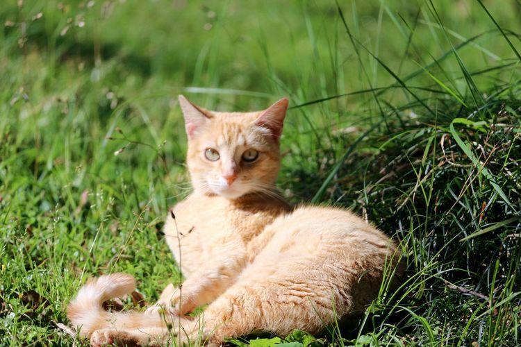 Portrait of cat sitting in grass on field