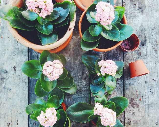 Planting Abundance Arrangement Beauty In Nature Blooming Blossom Botany Bouquet Bunch Of Flowers Close-up Day Decoration Flower Flower Arrangement Flower Head Fragility Freshness Growth In Bloom Nature No People Petal Pink Color Plant Variation Kalanchoe