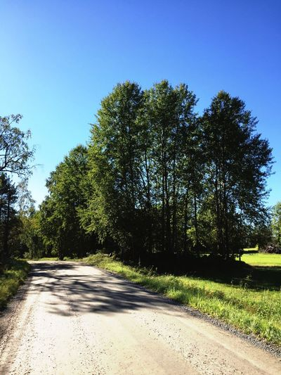 Nature Nature Road Tree Trees Road Sunny Day Sunny Peter Wernqvist Wernqvist On The Road