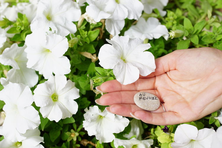 Cropped hand of woman holding pebble with text by white flowering plants
