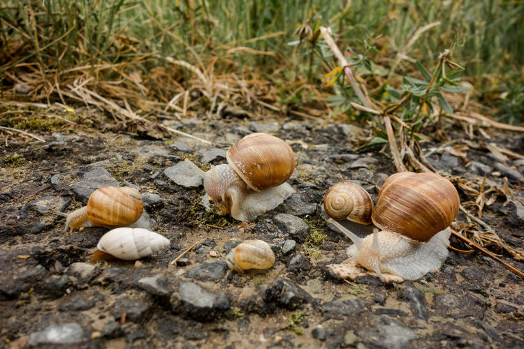 Creatures Schnecke Slow Food Snail Tiere Weinberg Weinbergschnecke Animal Field Food Land Nature No People Outdoors Slow