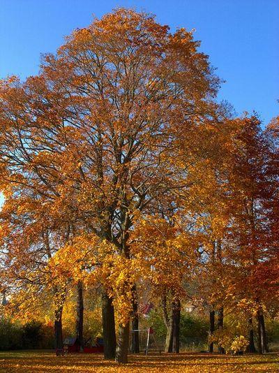 Herbst Autumn Goslar Harz