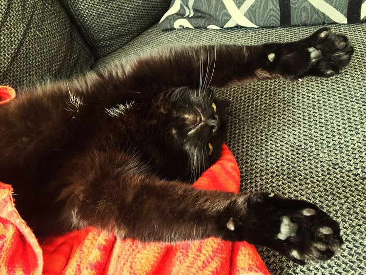 Hands Up Hands Up Don't Shoot Hände Hoch my Trixie love, Cat♡ Cats 🐱 Catlover ♡ Katzenliebe Katzen 💜 Katze Schwarze Katze Black Cats Black Cat Animals🐾 Tiere♡ Hauskatze Chats Chat Noir