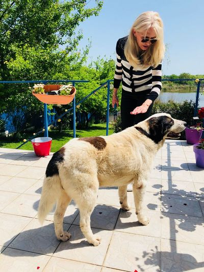 Woman Petting Dog While Standing At Backyard During Sunny Day