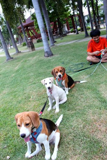 i-tim & friends...did he think that he is beagle?haha so cute..>_< Dog My Puppy My Dog Dogs Of EyeEm Doglover Dogoftheday EyeEm Animal Lover Animal Photography Ilovemydog Cookieanditim Nature's Diversities Nature's Diversities - 2016 EyeEm Awards The Great Outdoors - 2016 EyeEm Awards The Street Photographer - 2016 EyeEm Awards The Essence Of Summer