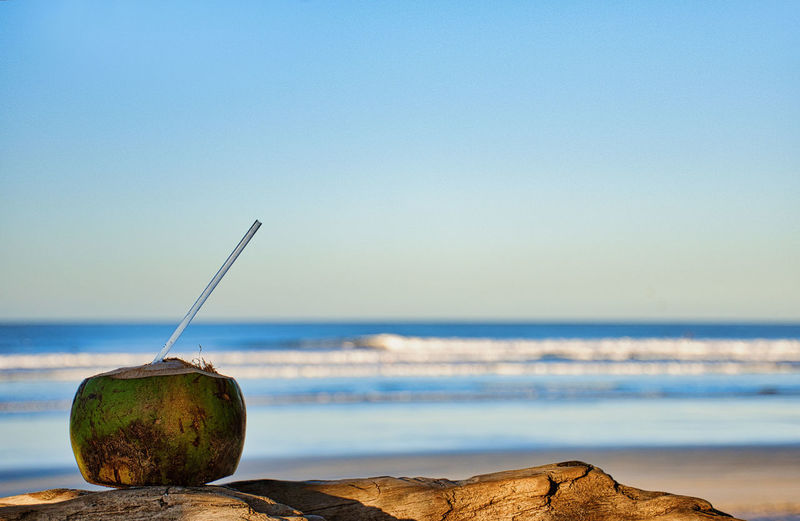 Close-up of coconut on wood at beach against clear sky