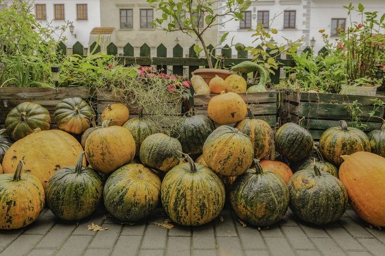 Pumpkins for sale in market