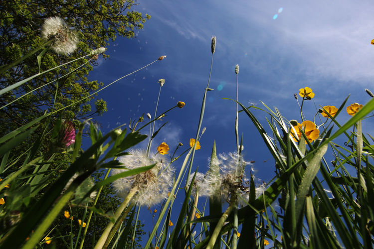 Close-up of yellow flowering plants against sky