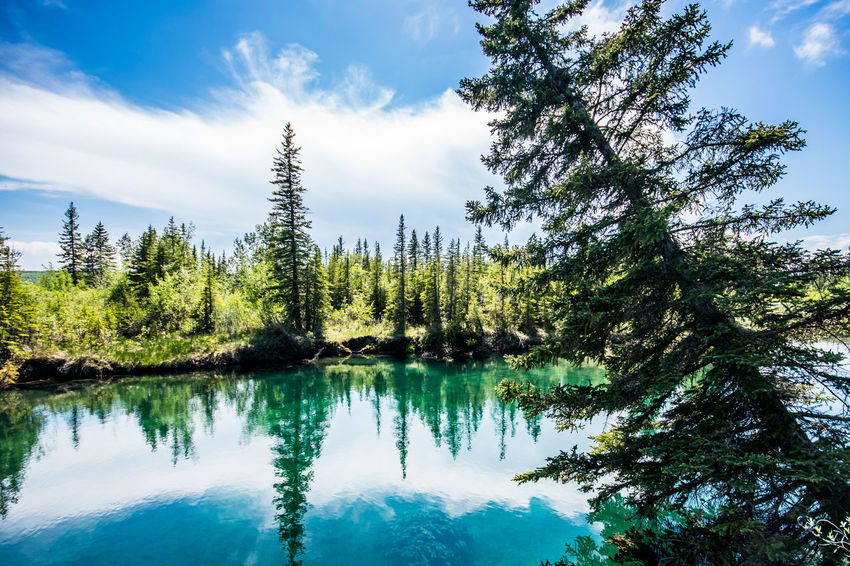 Alberta Beauty In Nature Calgary Canada Cloud - Sky Day Forest Growth Nature No People Outdoors Reflection Scenics Sky Tranquil Scene Tranquility Tree Water YYC