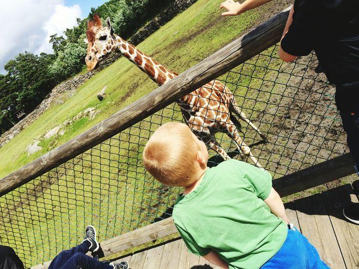 Meeting the giraffe Giraffe Zoo Children People Animals