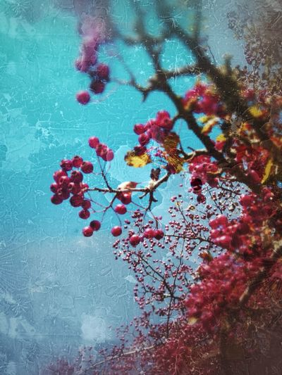 Broken Glass Effect Berries On A Branch Many Berries Red Berries Selective Focus Tree Flower Branch Winter Red Flower Head Fruit Sky Close-up
