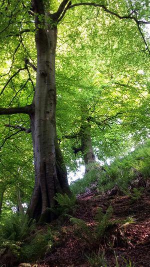 Forest Scenery Landscape Tree