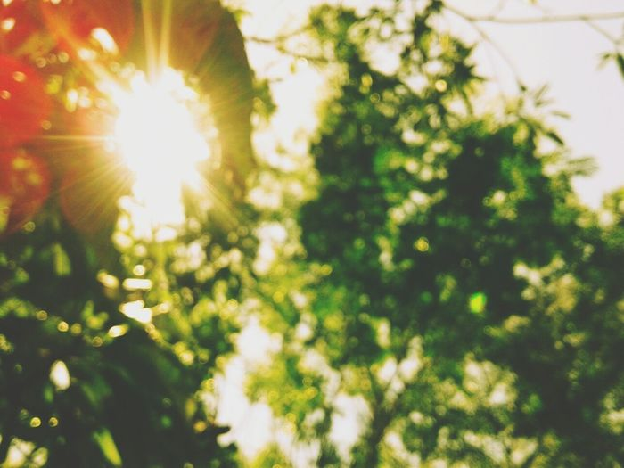 Sunlight Lens Flare Sun Summer No People Branch Springtime Day Freshness Close-up Tree Outdoors Beauty In Nature Green Color Growth Nature Plant