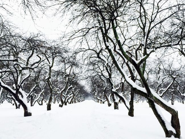 Tree Winter Snow Cold Temperature Bare Tree Nature Branch Outdoors Beauty In Nature Sky Tranquility No People Day Low Angle View Scenics Snowlandscape Wonderland Snow ❄ Apple Tree Beauty In Nature Season