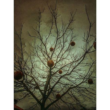Christmasornament Julkulor Lektmedbild  tree träd Visby östercentrum
