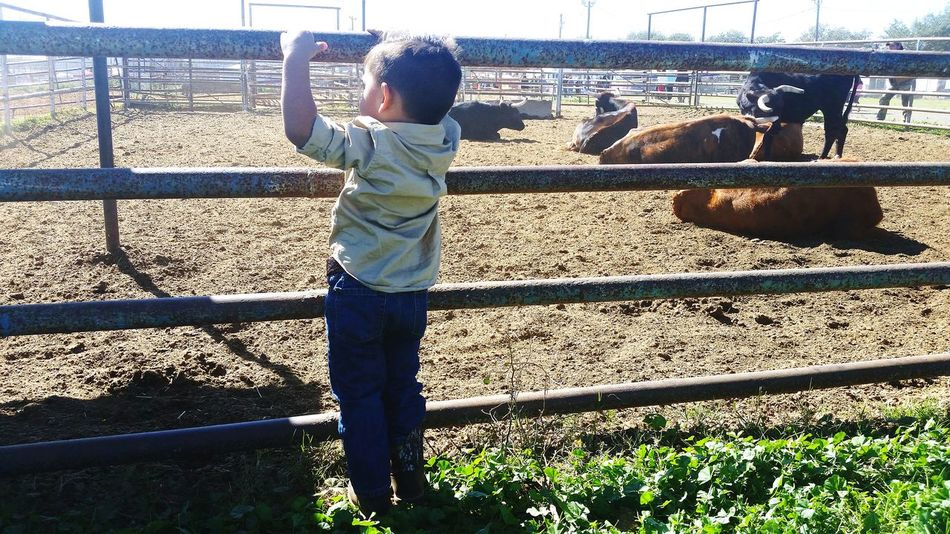 Cowboy Nephew  Lifedowns GrowingUp Cows Ranch Life Little Boy Wrangler Boots