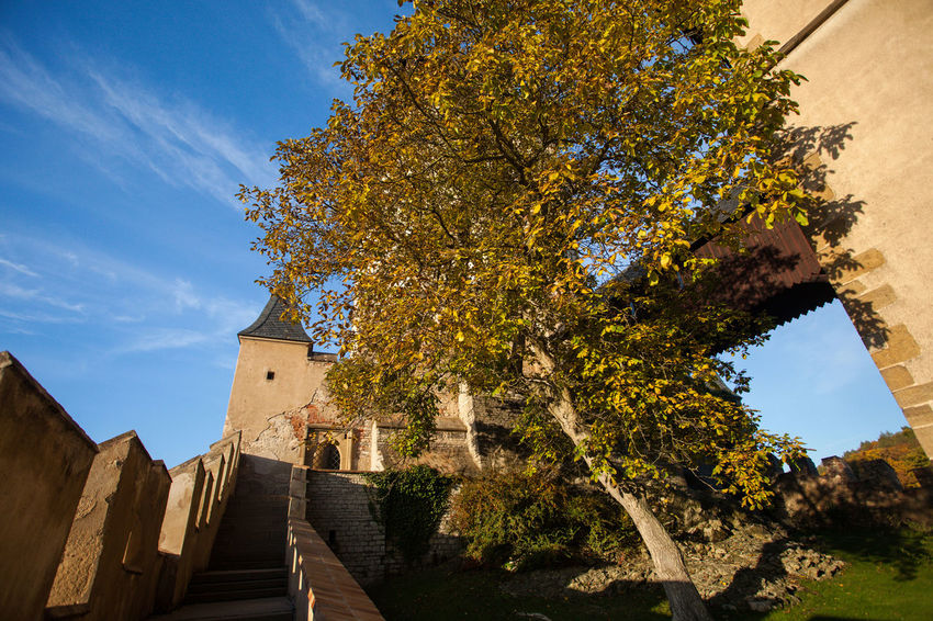 The path leads to ruinous castle, tower against a background of blue sky. Ancient Antique Architecture Autumn Building Exterior Built Structure Castle Day History Nature No People Outdoors Sky Stairs Tower Tree