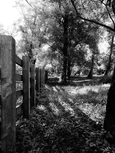 Strijensas Hoeksche Waard Black & White Nature Trees Fence