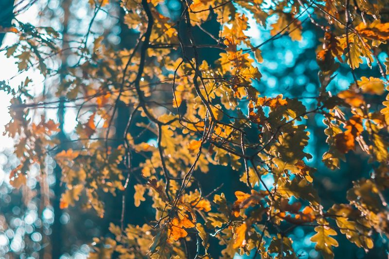 leafs Tree Branch Tree Area Beauty Forest Leaf Plant Part Multi Colored Autumn Fruit