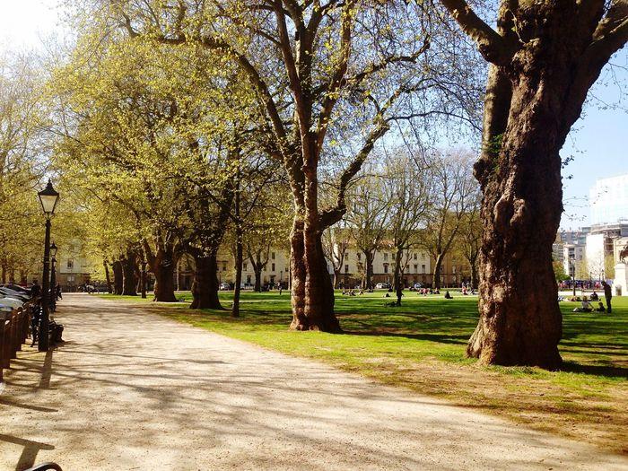 Walking Around Taking Photos Spring Park Trees Bristol England Europe Spring Into Spring
