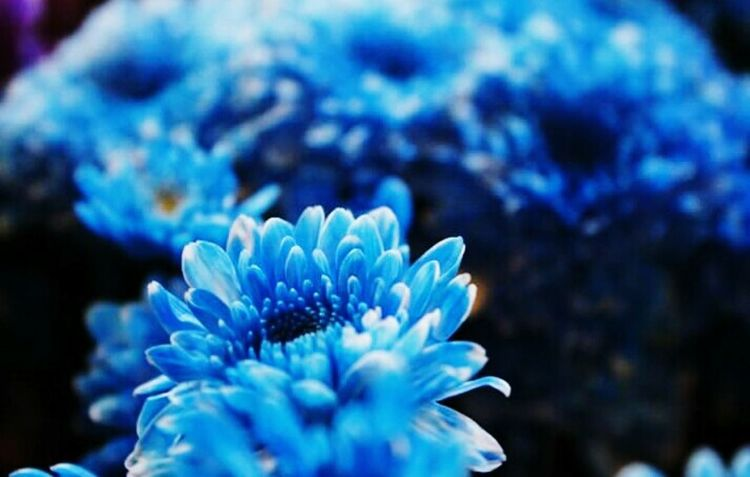 Taking Photos Blue Flowers EyeEm Nature Lover EyeEm Best Shots Nature Photography Macro Beauty