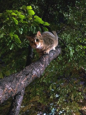 Cat On The Tree Feral Cat Green Color Lake & Cats Nature People & Cats Tree Wildcat