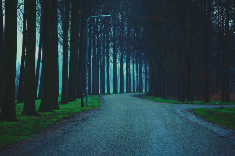 """Misty series."" (My travel photo series last December to the Netherlands). Netherlands Tree Trunk Winter Cold Temperature Cold Windy Fog Misty Tree Forest Treelined Tree Area Empty Road Countryside Pathway Diminishing Perspective The Great Outdoors - 2018 EyeEm Awards HUAWEI Photo Award: After Dark 17.62° Analogue Sound"