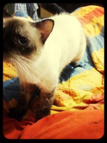 Kitty Gatos Relaxing ANGELICA JATIVA RUIZ