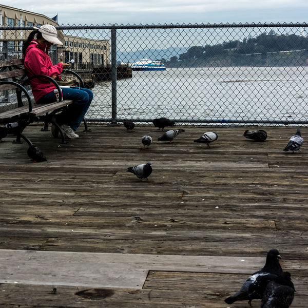 Woman capturing pigeon sounds. Bench San Francisco, California Sound Wood Backgrounds Bay Day Embarcadero Waterfront One Person Outdoors Pigeons Real People Recording Sitting Water Waterfront Women Street Photography