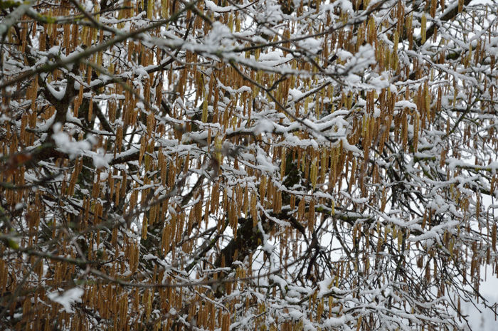 #Beautiful Nature #EyeEm Nature Lover #Gruyère #leaves #Nature  #seasons  #snow #snow On Leaves #snowyday #Switzerland #winter Trees #winterday