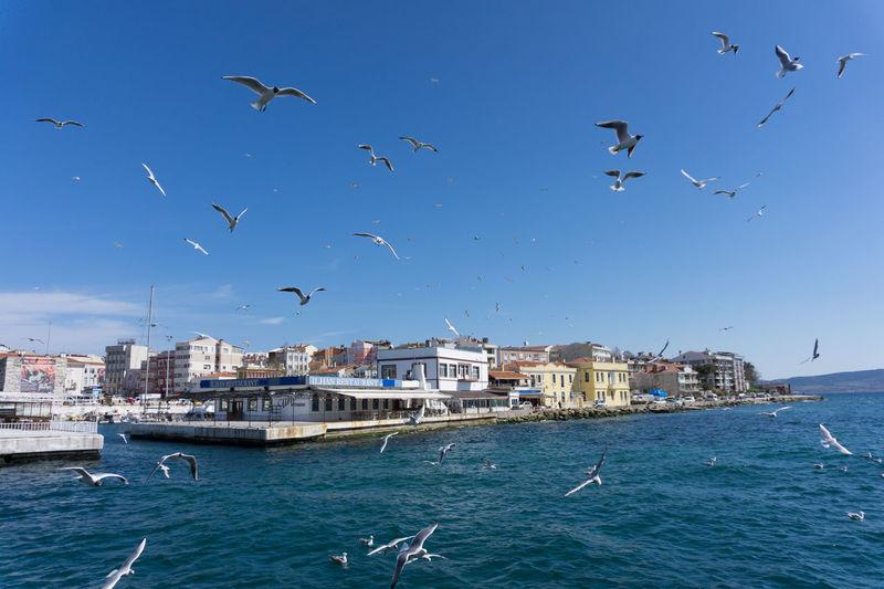 Seagulls flying over sea against blue sky