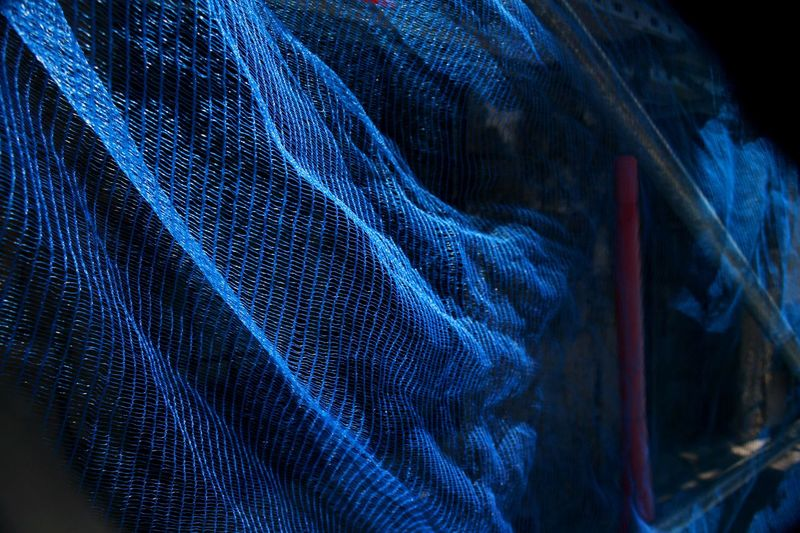 Beauty in simple things. Abstract Backgrounds Blue Blue Colour Blue Net Close-up Construction Site Fabric Focus On Foreground Net Protective Net Selective Focus Synthetic Colors And Patterns