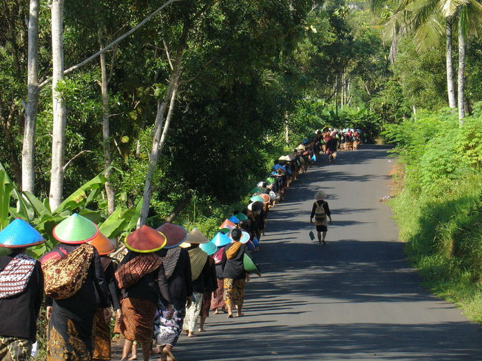 People walking on road amidst trees