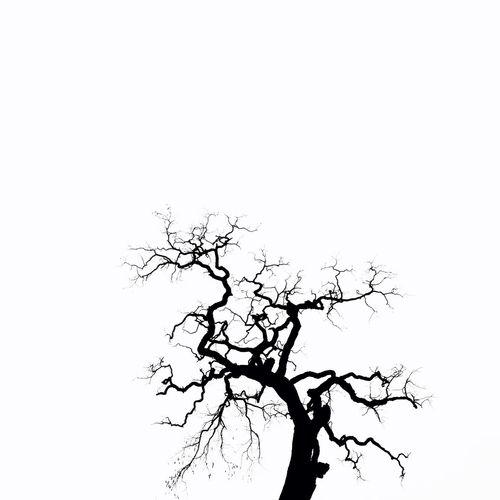 Tree Nature Park Winter Contrast Blackandwhite Monochrome