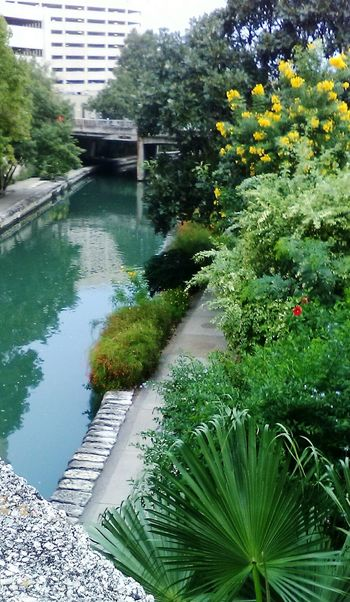 San Antonio Riverwalk  Built Structure Bridge - Man Made Structure Tree Plant River Nature Green Color Tranquil Scene Scenics Water Plant Photography Plant Growth Outdoors EyeEm Gallery Photography Is My Escape From Reality! Thank You! 💕
