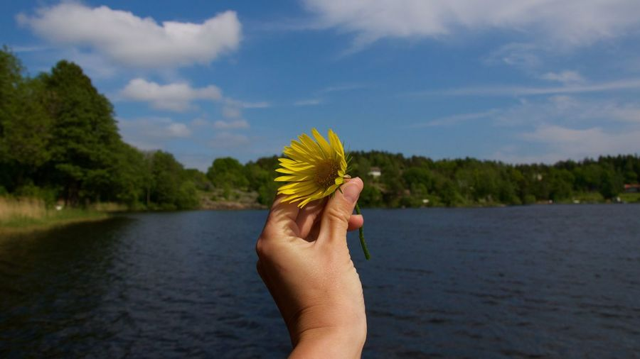Cropped image of person hand holding yellow flower by lake against sky
