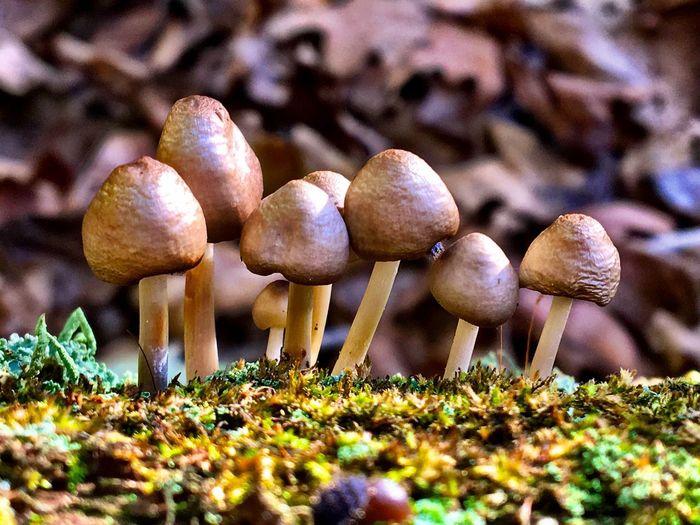 Macro Moss