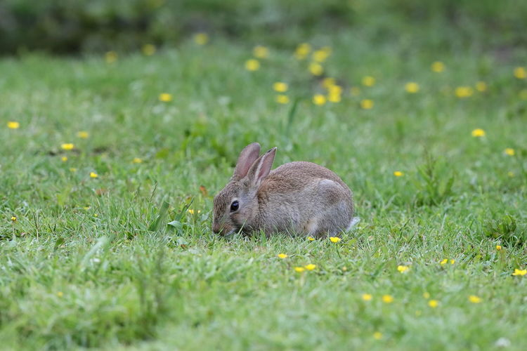 View of an animal on grass