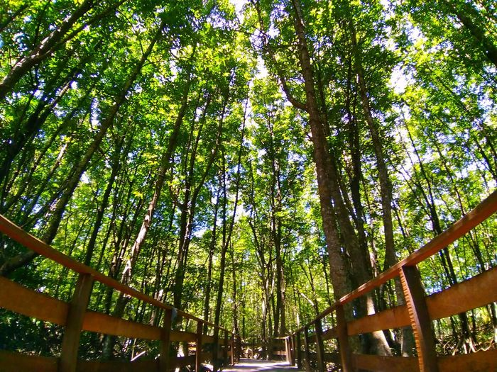 #mangrove #iapaward #Nature  #Plants Tree Branch Forest Tree Trunk Green Color Grove