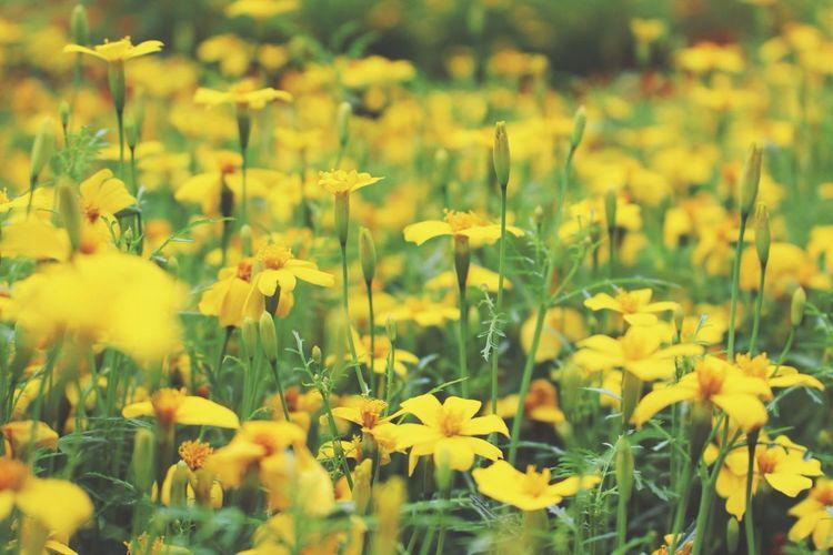 Riga Flowers Nature