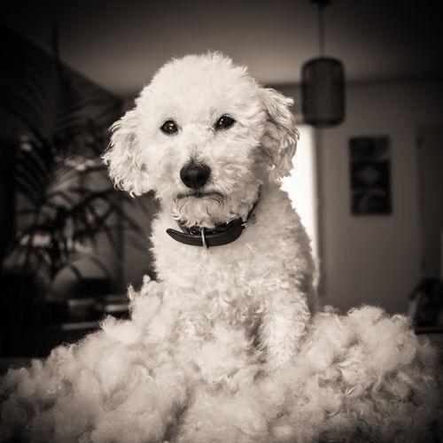 Dog after