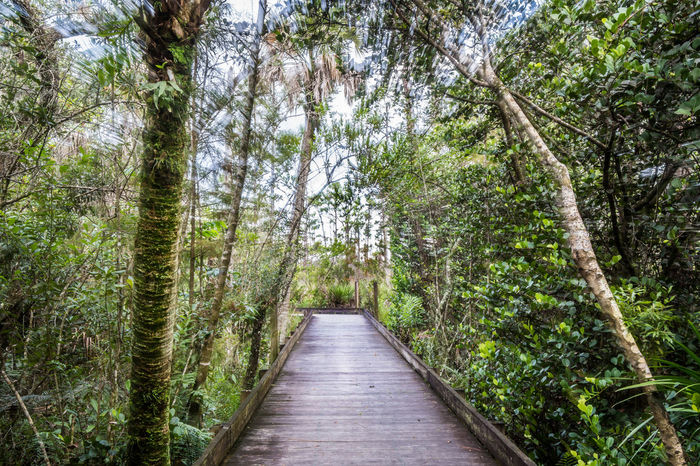 Boardwalk through everglades hammock shown from the perspective of someone walking. Palmetto Swamp Time Warp Tunnel Beauty In Nature Boardwalk Branch Day Everglades  Forest Freshness Green Color Nature No People Outdoors Pine Tree Plant Scenics Tranquil Scene Tranquility Tree