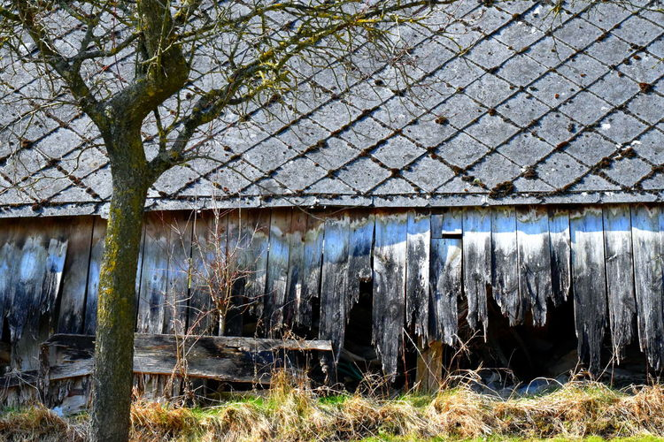 Abandoned barn. Abandoned House Abandoned Abandoned Barn Abandoned Building Architecture Broken Broken Wall Building Building Exterior Built Structure Corrugated Iron Day Nature Needs Renovation No People Outdoors Tree