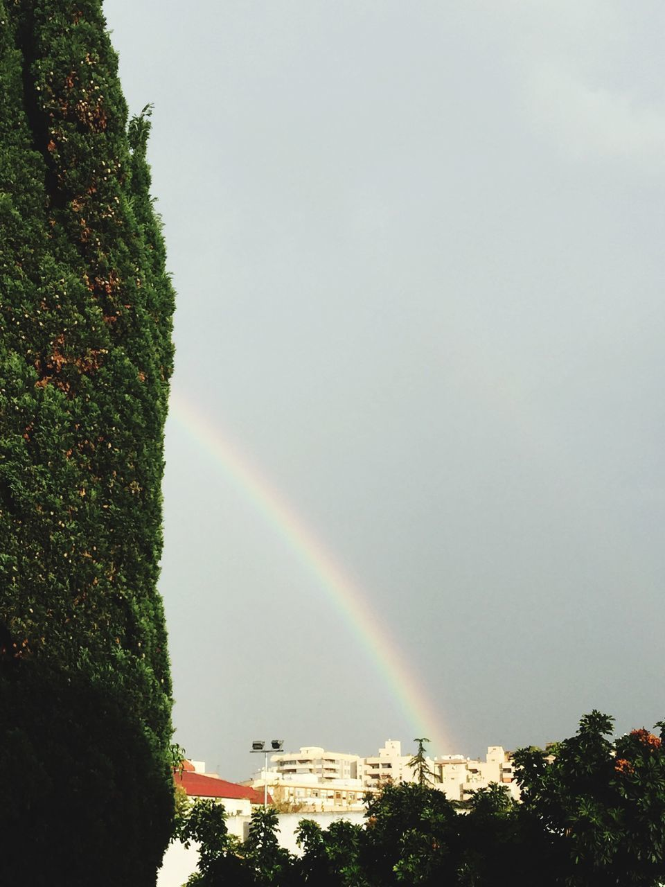 LOW ANGLE VIEW OF RAINBOW OVER TREES AND PLANTS