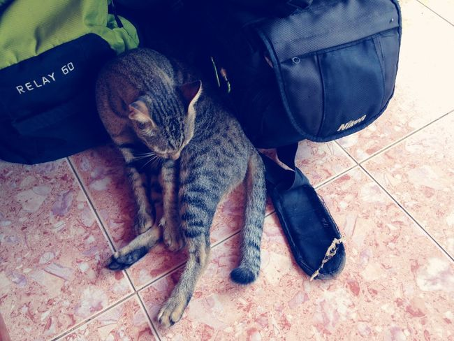 Cat on Da Bag.. 16Snow EyeEm Selects One Animal Vertebrate Pets High Angle View Mammal Relaxation Cat Flooring Domestic Cat