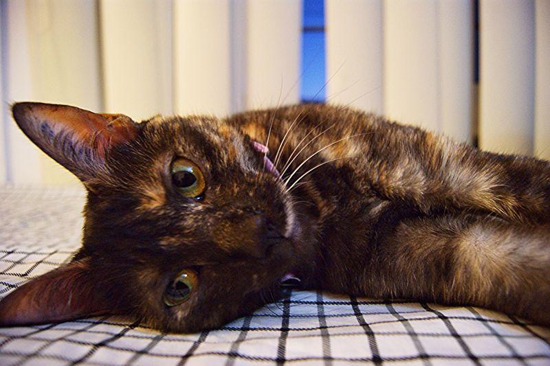 Animals Cat