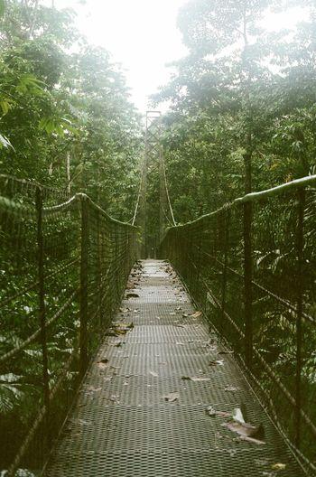 Costa Rica Suspension Bridge Mission Mystery 35mm Film
