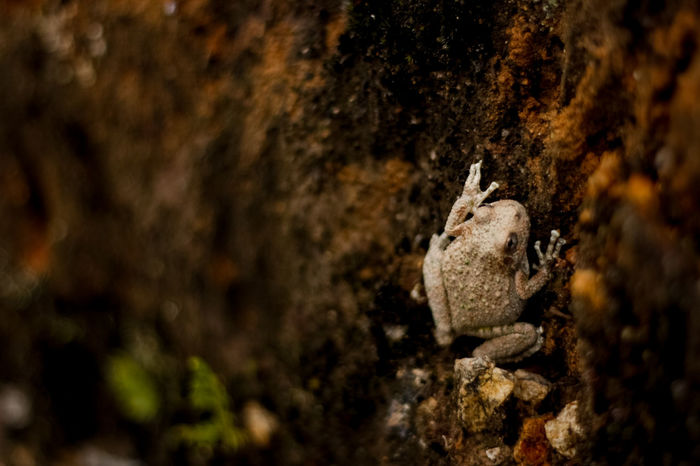 Frog´s life. Animal Animal Themes Close-up Focus On Foreground Frog One Animal Selective Focus Wildlife