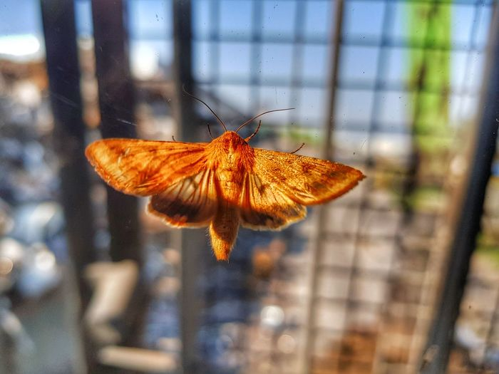EyeEm Selects Butterfly - Insect Insect One Animal Animal Themes Animals In The Wild Freshness